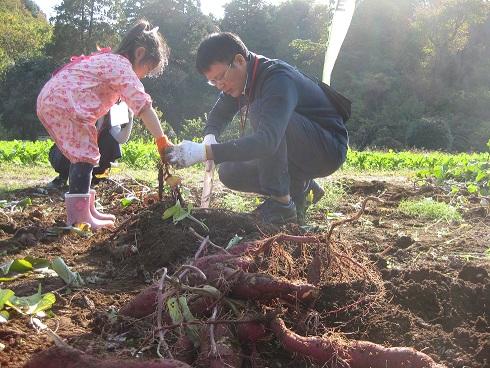 17年度サツマイモ作り教室収穫沢山掘れた